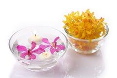 желтый цвет головной орхидеи свечки пурпуровый Стоковая Фотография RF
