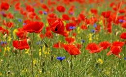 желтый цвет голубого красного цвета Стоковая Фотография