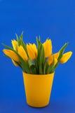 желтый цвет голубых тюльпанов Стоковое Изображение RF