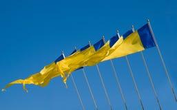 желтый цвет голубых флагов Стоковые Изображения RF