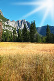 желтый цвет горы травы осени плотный Стоковая Фотография