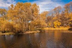 Желтый цвет деревьев осени выходит озеру парк города голубого неба Стоковые Фотографии RF