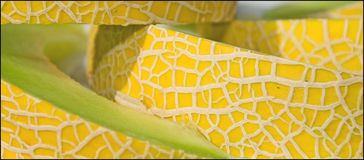 желтый цвет дыни Стоковое Изображение RF