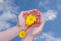 желтый цвет женщины рук цветков Стоковое фото RF