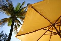 желтый цвет зонтика пальмы Стоковые Фото