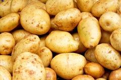 желтый цвет картошек стоковые фотографии rf
