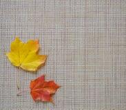 Желтый цвет кленового листа на серой предпосылке Квадратная рамка Стоковые Изображения