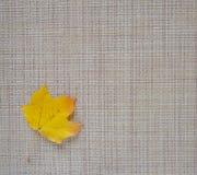 Желтый цвет кленового листа на серой предпосылке Квадратная рамка Стоковые Фотографии RF