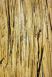 желтый цвет кожуры Стоковые Изображения RF