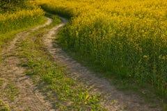 желтый цвет колейности рапса поля Стоковое Изображение