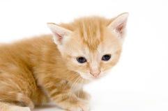 желтый цвет котенка стоковое фото