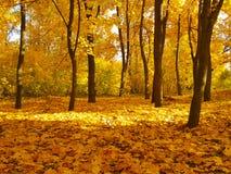 Желтый цвет ландшафта парка осени Стоковые Изображения RF