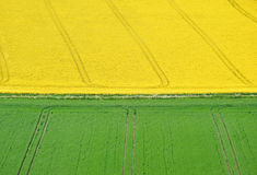 желтый цвет ландшафта полей зеленый Стоковое фото RF