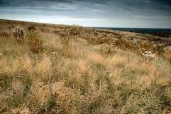 желтый цвет ландшафта холмов Стоковое фото RF