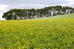 желтый цвет ландшафта цветков страны пропуская Стоковые Фотографии RF