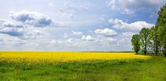 желтый цвет ландшафта Стоковое Изображение RF