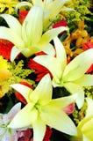 желтый цвет лилий Стоковое Фото