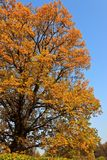 желтый цвет листва осени Стоковое фото RF