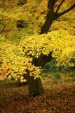 желтый цвет листва падения Стоковые Фото