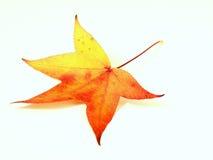 желтый цвет листьев осени красный Стоковая Фотография