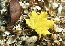 желтый цвет листьев предпосылки осени Стоковые Изображения