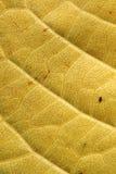 желтый цвет листьев предпосылки Стоковые Фотографии RF