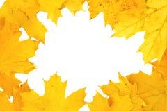 желтый цвет листьев рамки падения предпосылки осени Стоковая Фотография RF