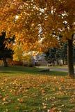 желтый цвет листьев Стоковая Фотография RF