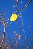желтый цвет листьев Стоковые Фотографии RF