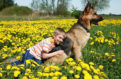 желтый цвет лужка собаки мальчика Стоковое Фото
