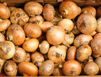 желтый цвет луков Стоковое Фото