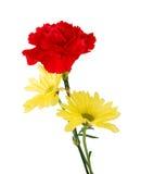 желтый цвет маргариток гвоздики красный Стоковая Фотография