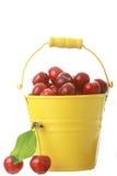 желтый цвет металла cheries ведра цветастый Стоковые Фотографии RF