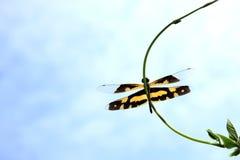 желтый цвет мухы дракона Стоковое Изображение RF