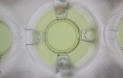желтый цвет образца хороший Стоковые Фото
