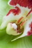 желтый цвет орхидеи Стоковое Изображение RF