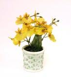 желтый цвет орхидей Стоковые Фотографии RF