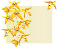 желтый цвет орхидей Стоковое Изображение RF
