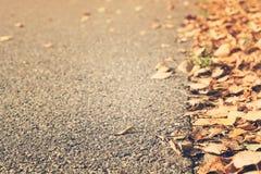 Желтый цвет осени сухой выходит над мостоваой с космосом экземпляра Стоковые Изображения RF