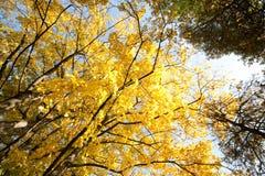 желтый цвет осени Стоковые Изображения