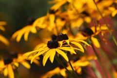 желтый цвет осени Стоковые Изображения RF