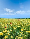 желтый цвет пастбища Стоковое Изображение