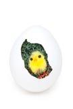 желтый цвет пасхального яйца цыпленока Стоковые Изображения RF