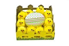 желтый цвет пасхального яйца цыплят Стоковое фото RF
