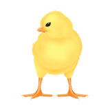 желтый цвет пасхи цыпленока изолированный иллюстрацией Стоковые Фотографии RF