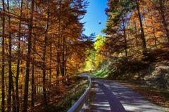 желтый цвет погоды валов солнца дороги осени зеленый Стоковая Фотография