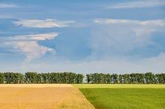 желтый цвет полей зеленый Стоковое Изображение
