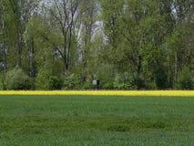 желтый цвет полей зеленый Стоковые Фотографии RF