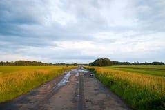 желтый цвет полей Стоковые Изображения RF