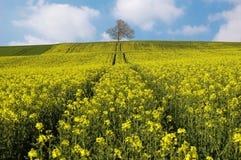 желтый цвет полей Стоковое фото RF
